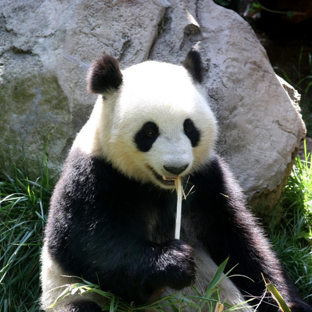 https://m.flickr.com/#/photos/pagedooley/5402340884/in/search_QM_q_IS_Panda